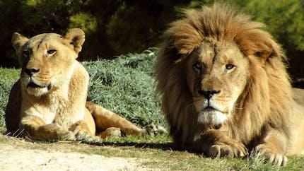 Parcs zoologique : Réserve africaine de Sigean