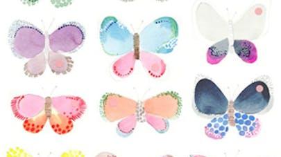 chason papillon
