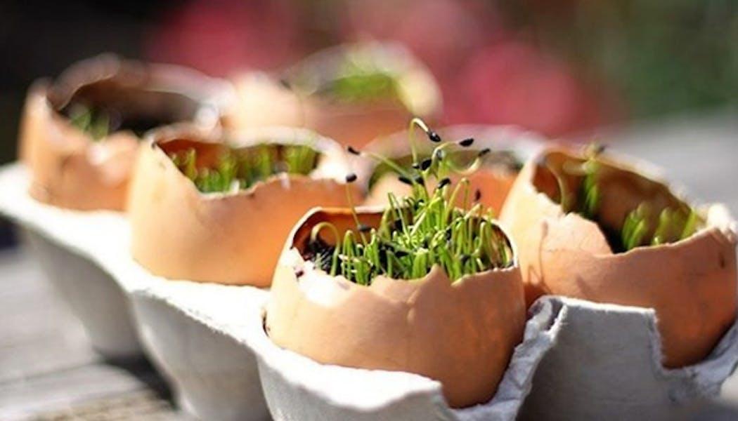 Planter un jardin dans des œufs