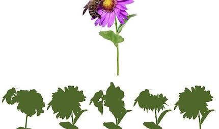 Pollen : jeu d'ombre