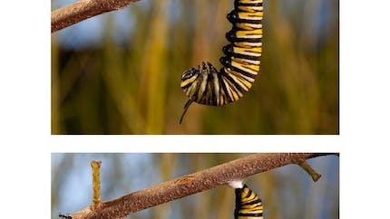 Pollen : les 7 différences (2)
