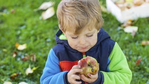 Pomme, poire pêche, abricot