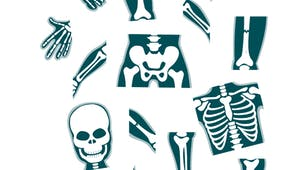 Puzzle squelette