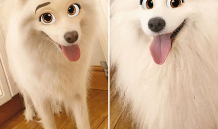 Quand Snapchat transforme les chiens en personnages Disney...