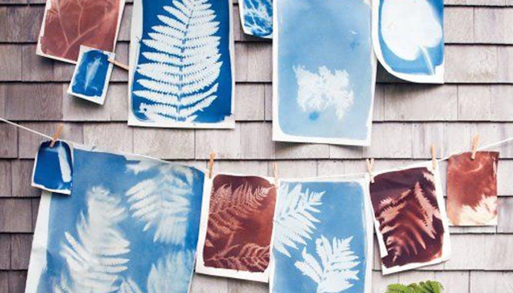 Réaliser des empreintes de feuilles avec le         soleil