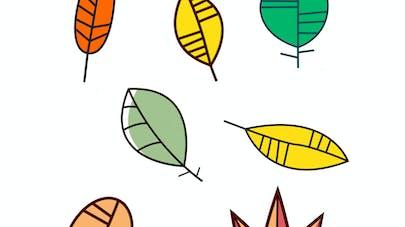 exercice symetrie feuilles