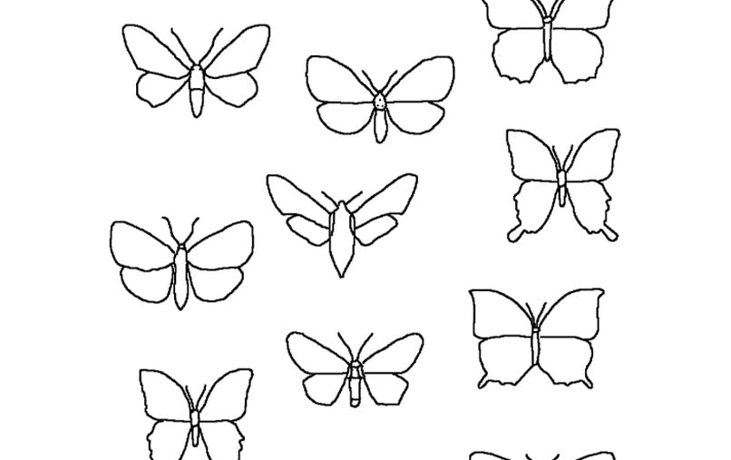retrouve la paire : les papillons