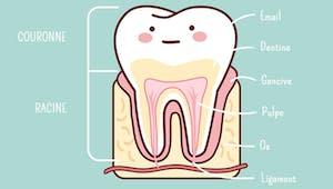 La dent