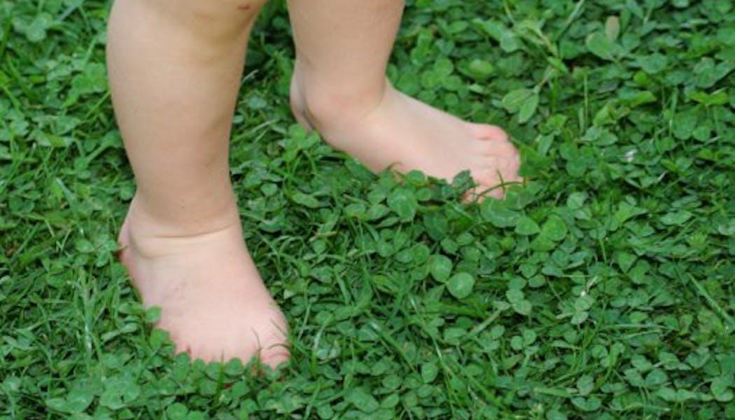 Trouver un trèfle à quatre feuilles