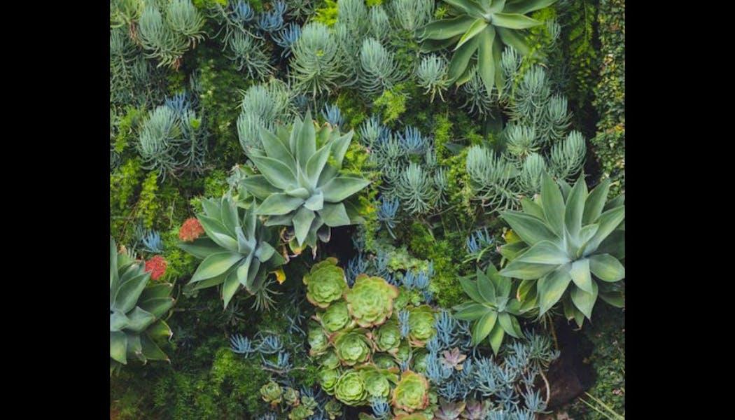 Un cadre végétal décoratif