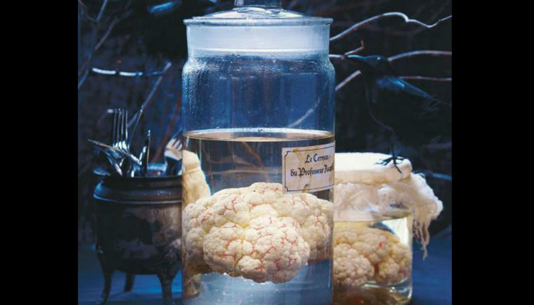 Un cerveau façon cabinet de curiosités