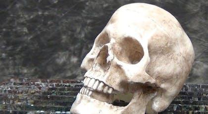 Un faux crâne hyper réaliste