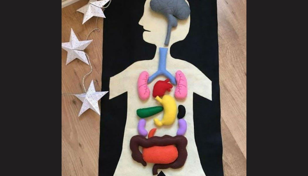 Un jeu pour connaître les organes du corps       humain