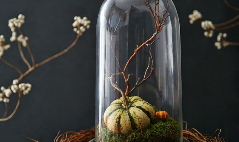Un terrarium avec une mini citrouille