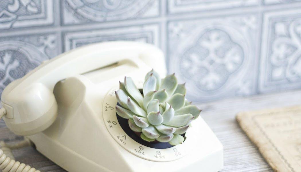 Une plante à l'appareil
