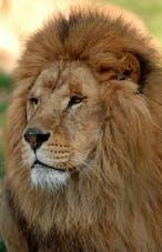 Image Zoo de la Barben