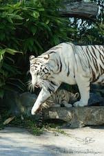Image Zoo de Maubeuge