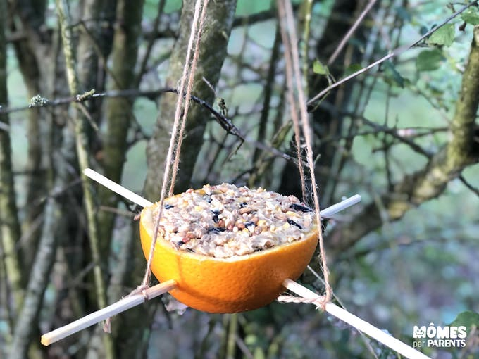 Mangeoire à oiseaux dans une orange