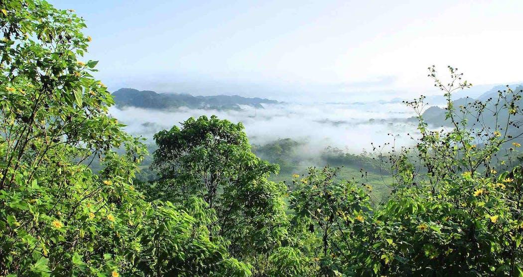 Forêt primaire d'Amazonie