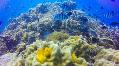 Récif corallien
