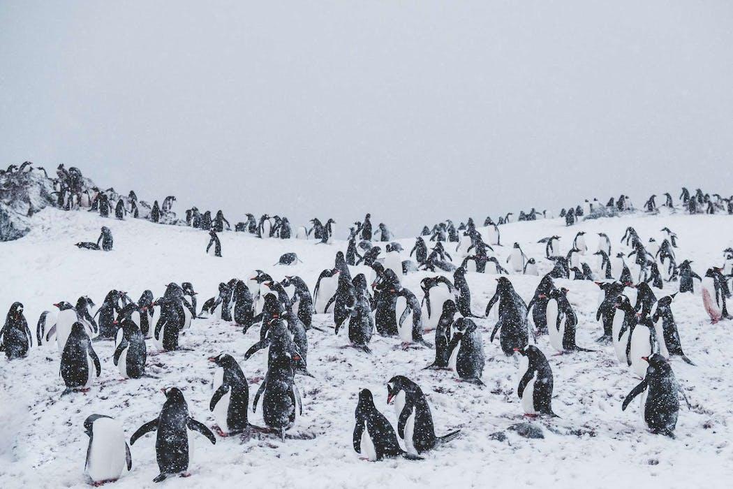 Pingouins sur un sommet enneigé