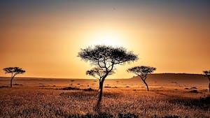 La savane: les chevaux, les éléphants et les kangourous l'adorent!