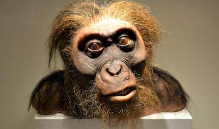 """A la découverte de l'Homo habilis, le premier """"homme""""..."""