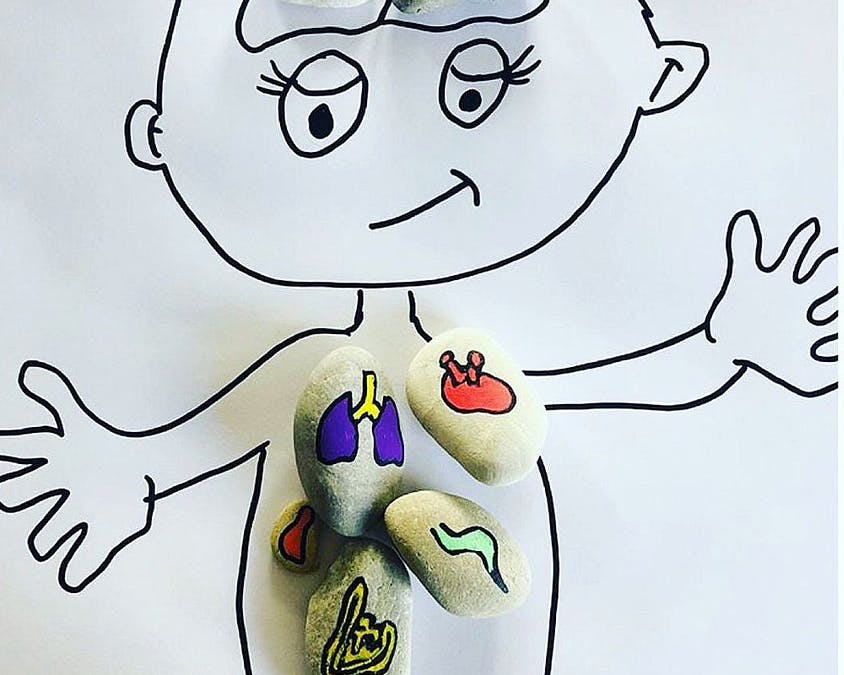 les organes sont peints sur  des mini galets