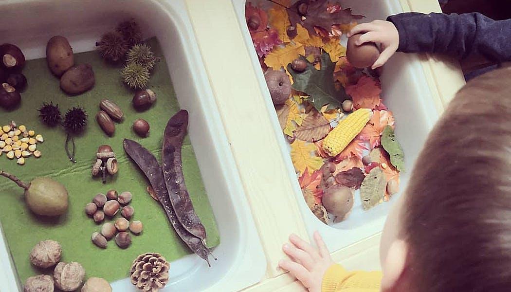 bac sensoriel d'automne avec des feuilles, des marrons, des noisettes, etc