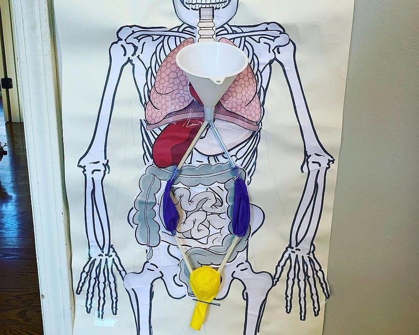 bricolage avec ballons sur le système urinaire