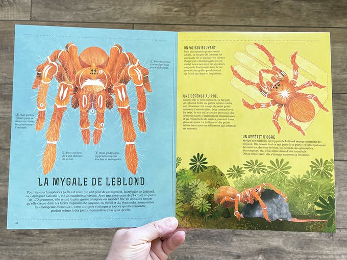 Terre animale - Dans la Jungle extrait 2