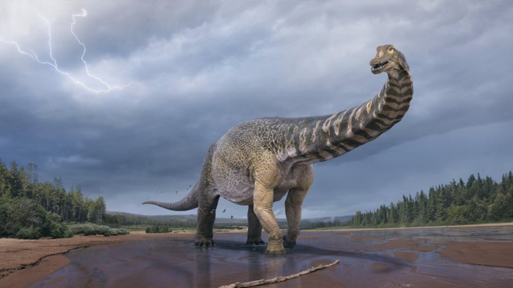 Dinosaure : une nouvelle espèce découverte en Australie !