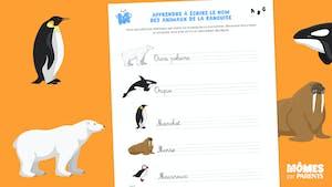 Apprendre à écrire le nom des animaux de la banquise