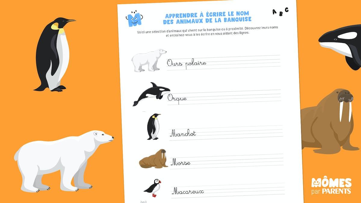 Apprendre à écrire les animaux de la banquise