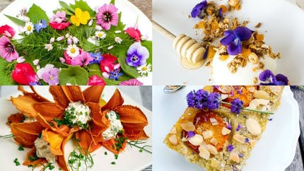 Cuisine: 20 recettes à base de fleurs à faire avec les enfants