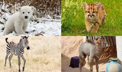 Les bébés animaux !