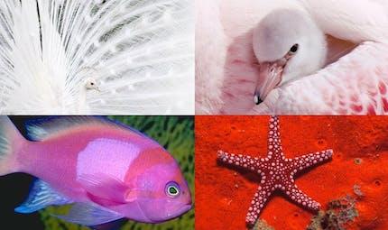 Les incroyables couleurs des animaux