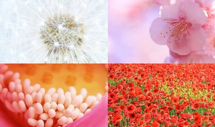 Toutes les couleurs sont dans la nature